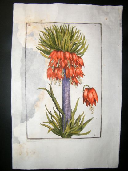 Daniel Rabel 1771 Folio Hand Col Botanical. Great Crown Imperial Lily 1 | Albion Prints